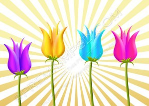 Colorful Tulips Vector – PSD Download